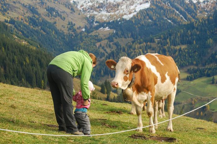 Kühe - Bio-Bauernhof in Großarl